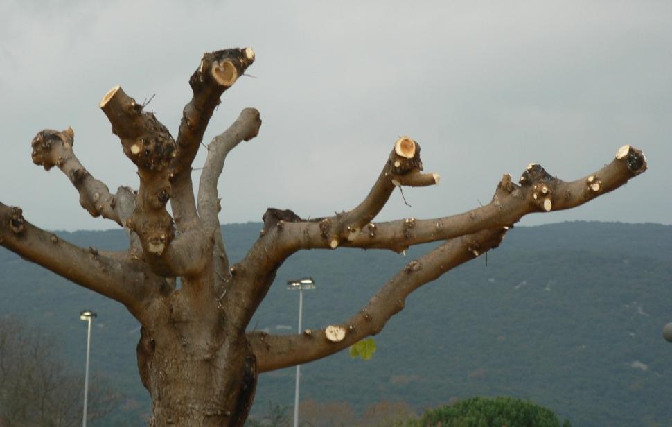 Ignorance de certains intervenants, malheur de l'arbre prévisible!