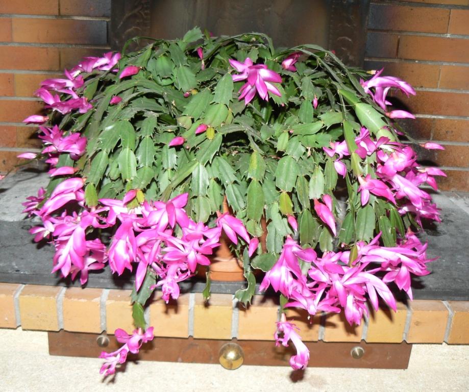 Floraison impressionnante et facile à réussir !